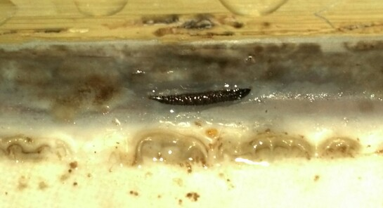 Grout Worms Lurking In A Well Used Shower Neuse Tile